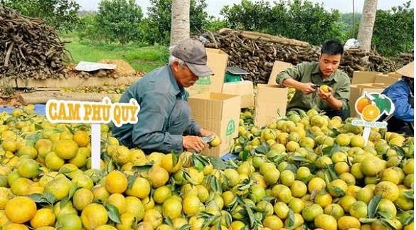 nông dân bán cam